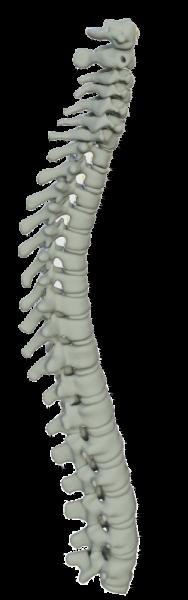 Physiotherapie Osteopathie Bad Salzuflen Wirbelsäule