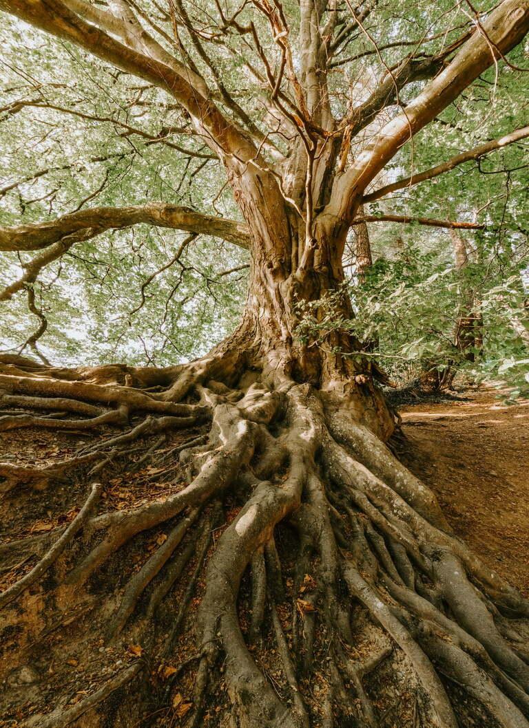 Physiotherapie Osteopathie Bad Salzuflen Baum 2